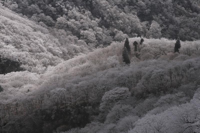 s-鶴見鞍ケ戸岳20090202 222