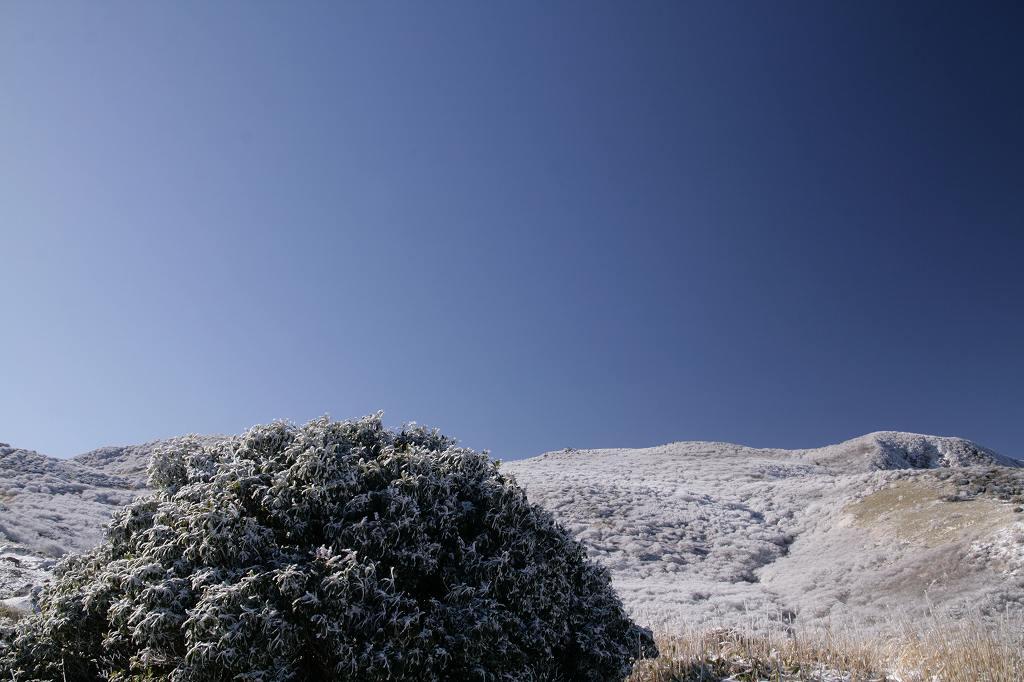 s-久住霧氷20090315 133