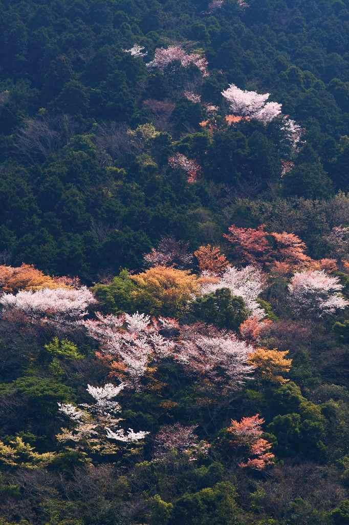 s-s-両ぐん高崎山20090330 040