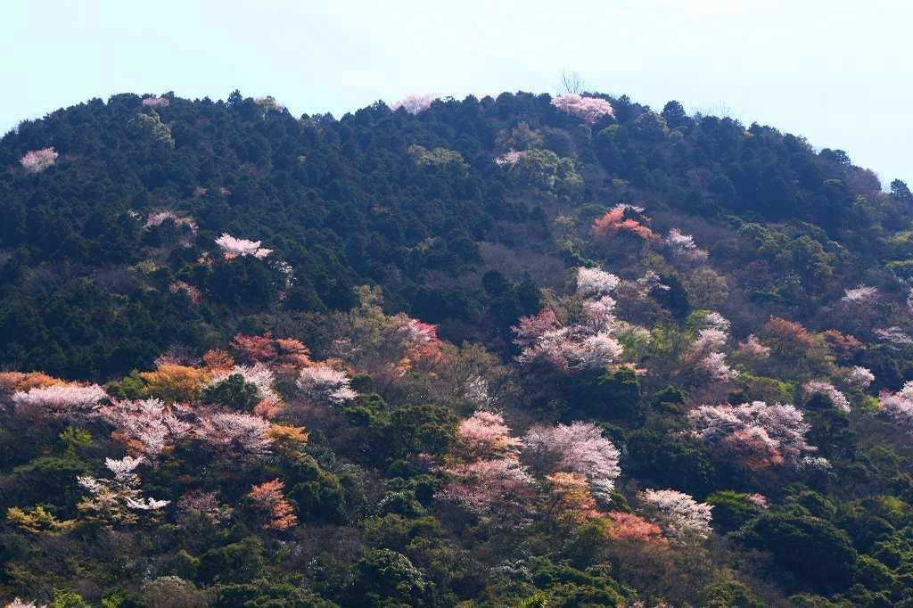 s-s-両ぐん高崎山20090330 053