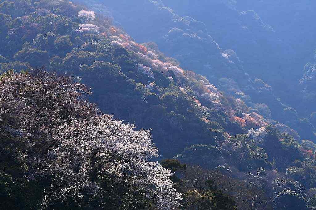 s-s-両ぐん高崎山20090330 070