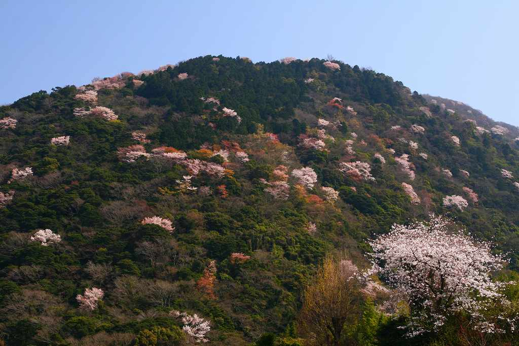 s-両ぐん高崎山20090331 029