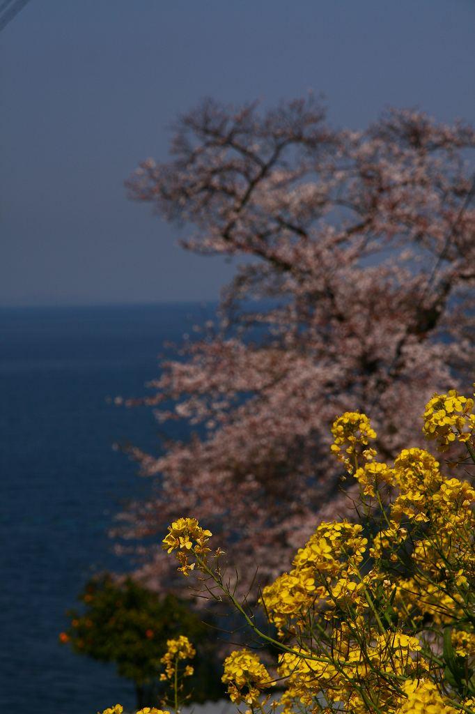 s-両ぐん高崎山20090331 033