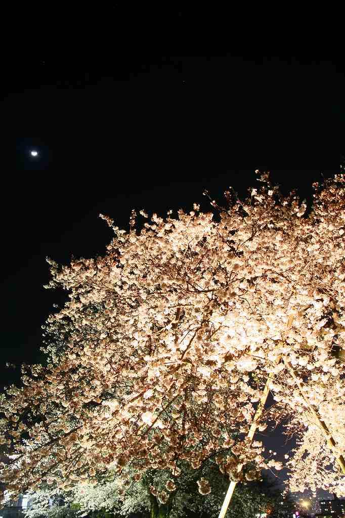 s-両ぐん高崎山20090331 138