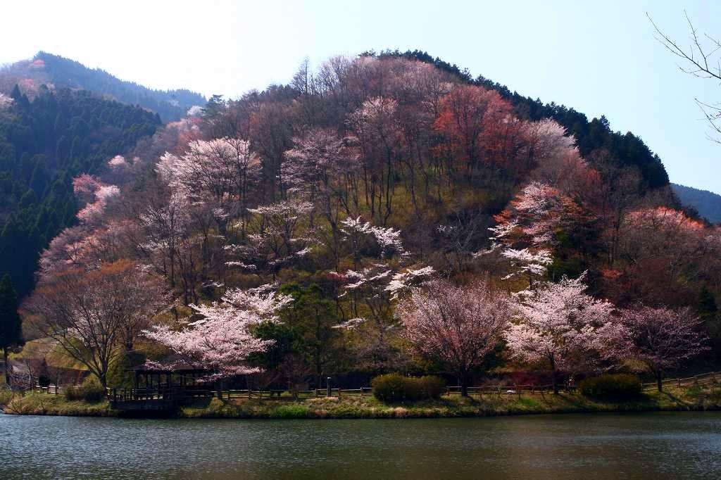 s-野津原桜20090404 090