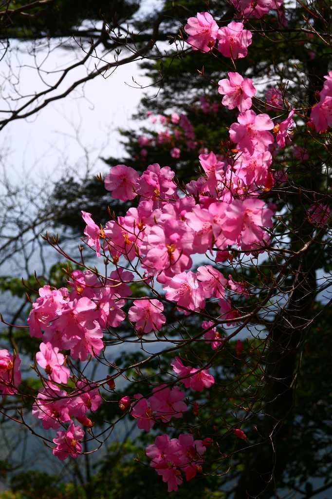 s-夏木山20090418 055