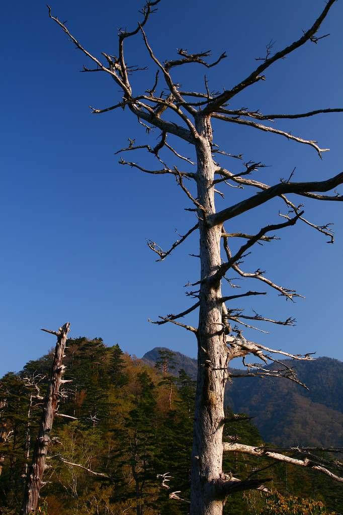 s-傾山山開杉ケ越20090429 006