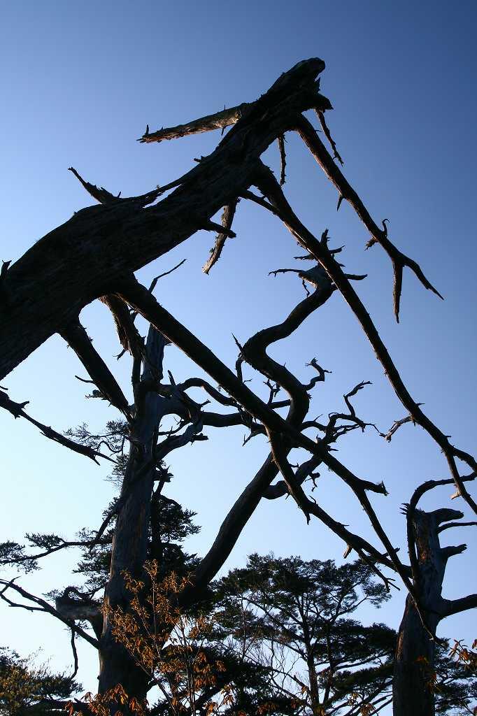 s-傾山山開杉ケ越20090429 007