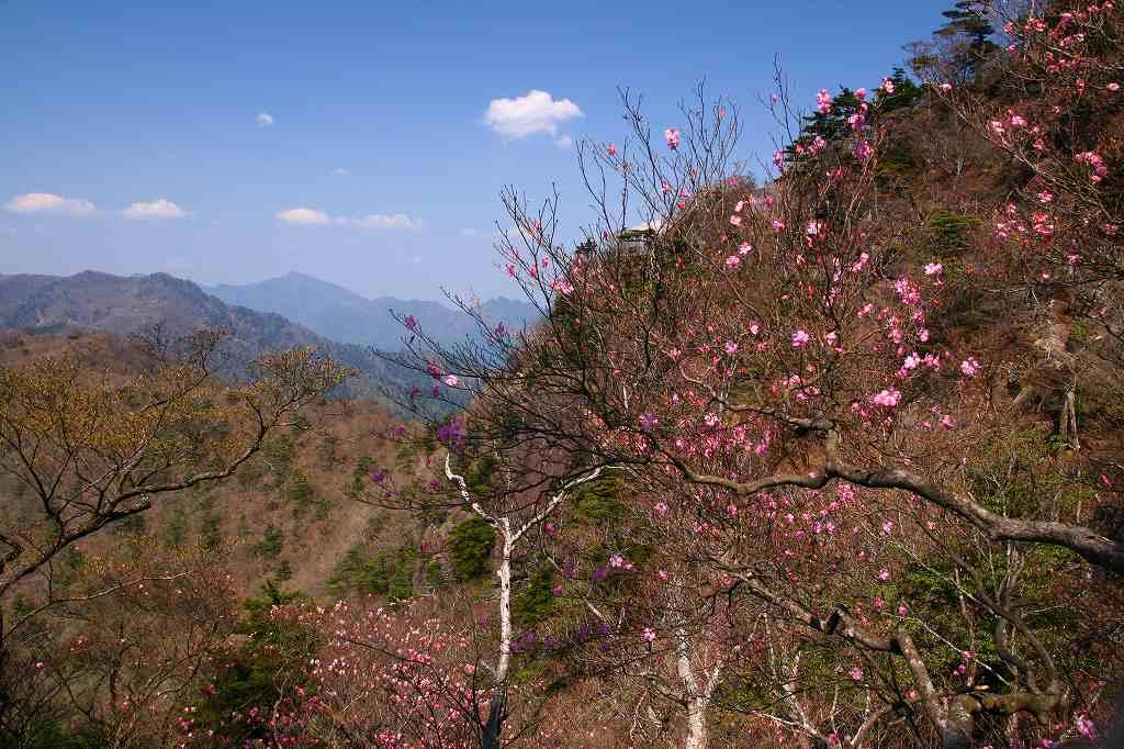 s-傾山山開杉ケ越20090429 071