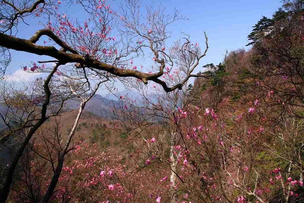 s-傾山山開杉ケ越20090429 082