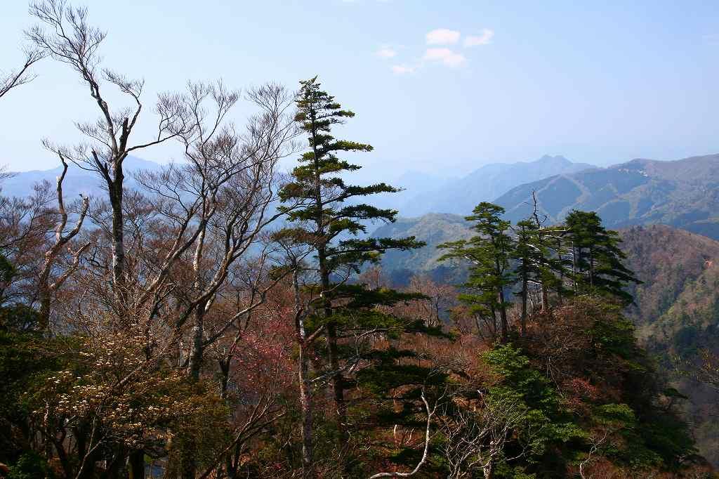 s-傾山山開杉ケ越20090429 085