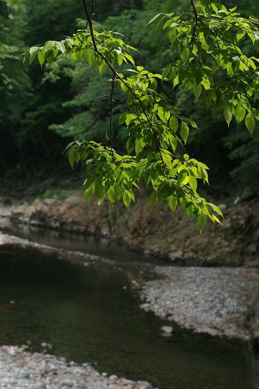 s-仙酔峡他20090516 089
