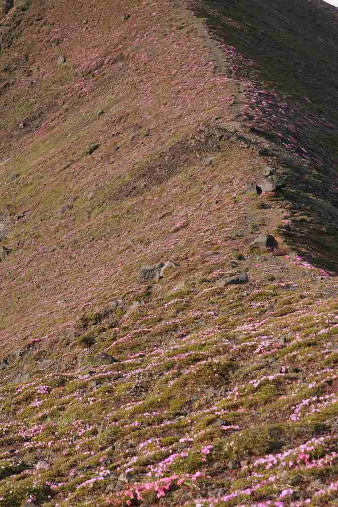 s-高千穂峰20090523 024