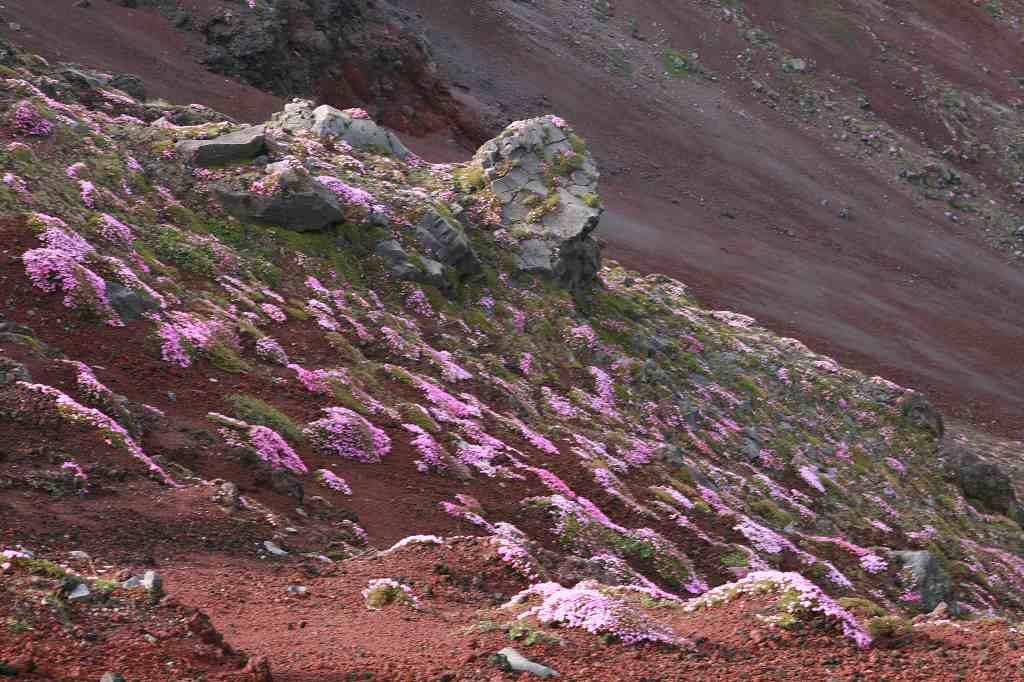 s-高千穂峰20090523 062