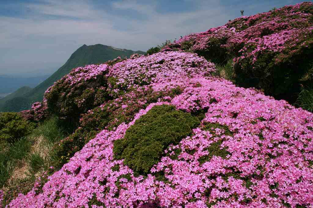 s-鶴見岳ミヤマ20090525 096