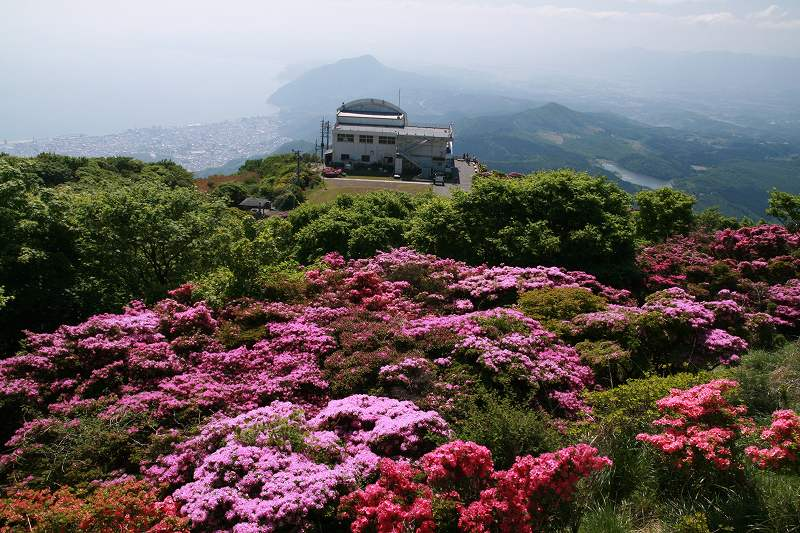 s-鶴見岳ミヤマ20090525 021