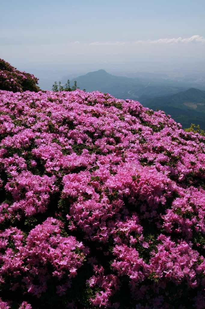 s-鶴見岳ミヤマ20090525 044