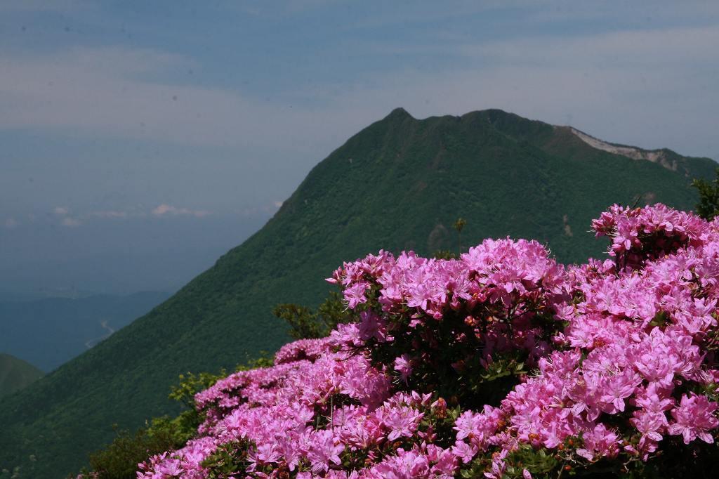 s-鶴見岳ミヤマ20090525 047