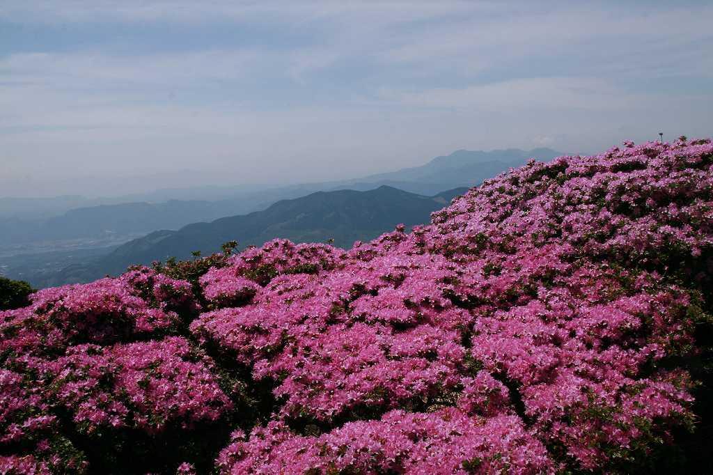 s-鶴見岳ミヤマ20090525 087