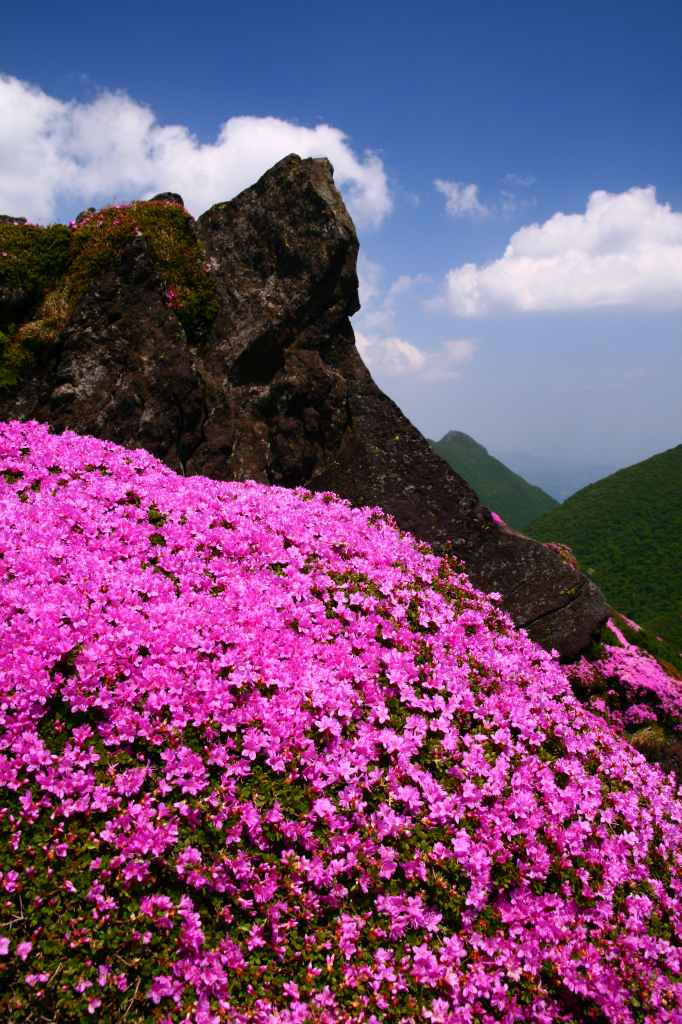 s-平治岳ミヤマ20090531-2 009