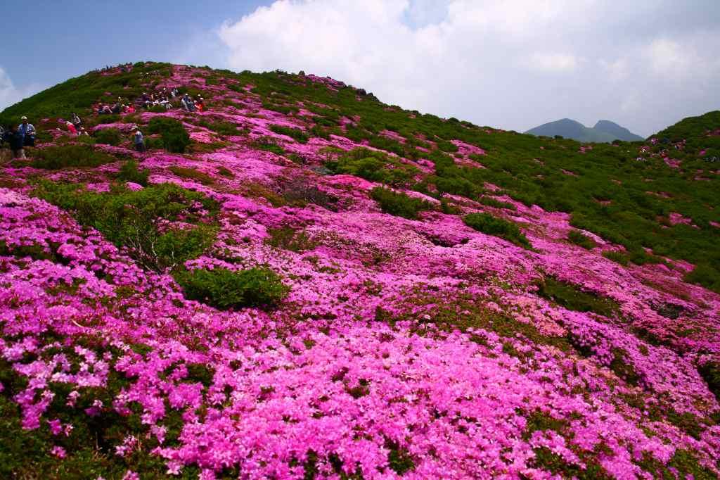 s-平治岳ミヤマ20090531 096