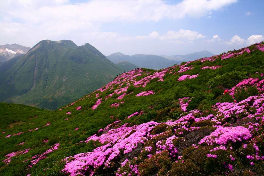 s-平治岳ミヤマ20090531 132
