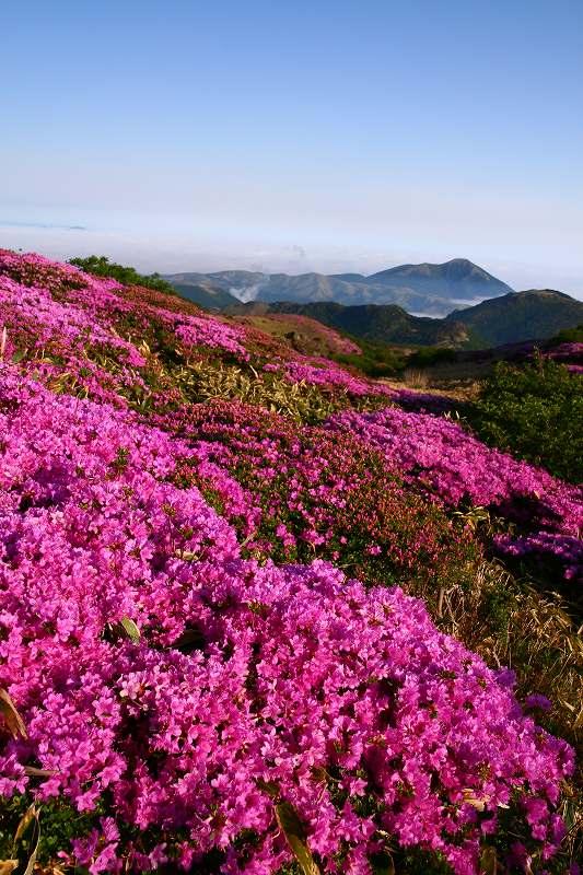 s-扇ヶ鼻岳ミヤマ20090607 050