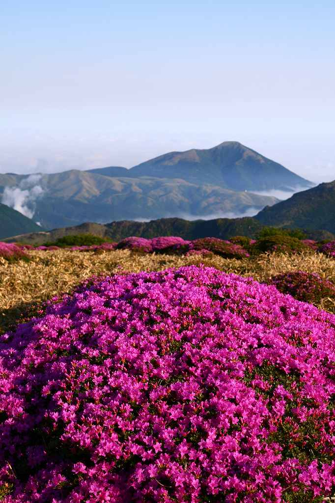 s-扇ヶ鼻岳ミヤマ20090607 063