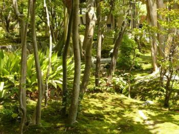 法華寺庭園08