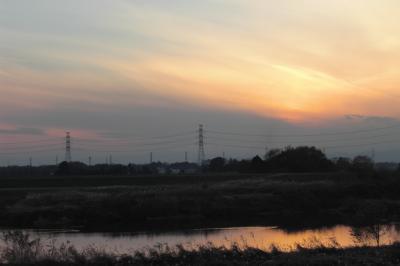 川島白鳥6