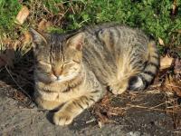 八丁湖の猫