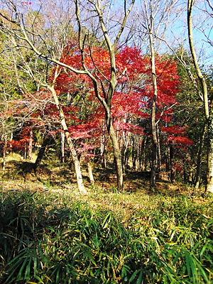 嵐山渓谷 (6)