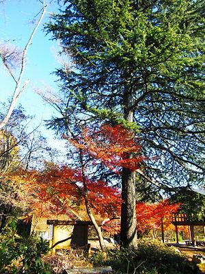 嵐山渓谷遊歩道 (4)