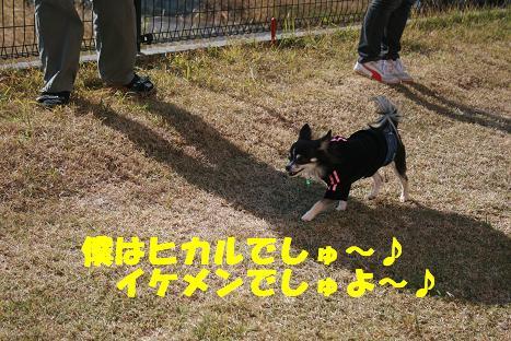 20081122_3.jpg