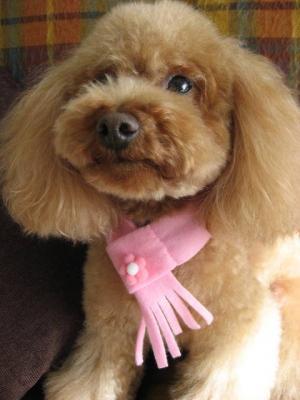 ピンクのフリンジマフラー