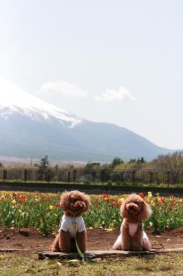 どこにいても富士山