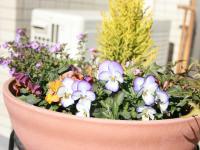 冬のお花たち