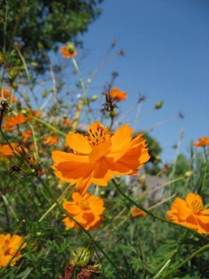 オレンジのお花