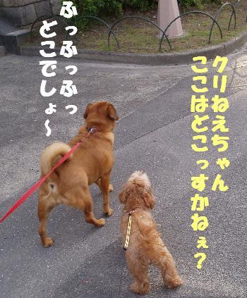 クリ&モコ