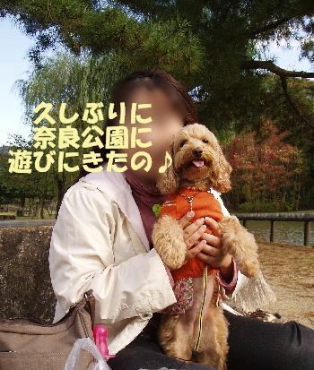 奈良公園A