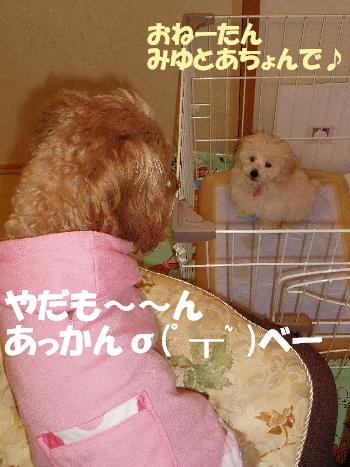 モコとみゆ