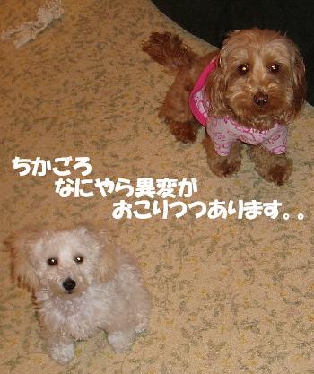 みゆ&モコ