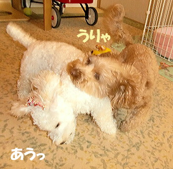 モコ&みゆ3
