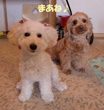 モコ&みゆ8
