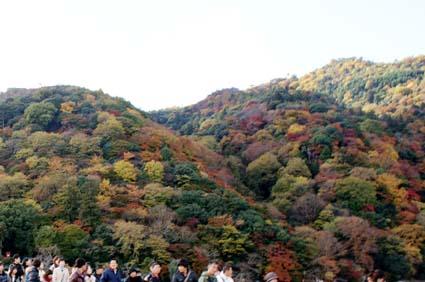 2008-1122-arasuyama01