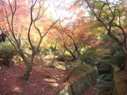 2008-1123-toufukuji01