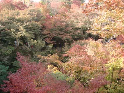 2008-1123-toufukuji02