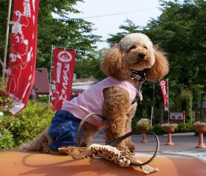2009-05-15izu-1-06