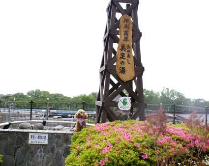2009-05-15izu-3-01