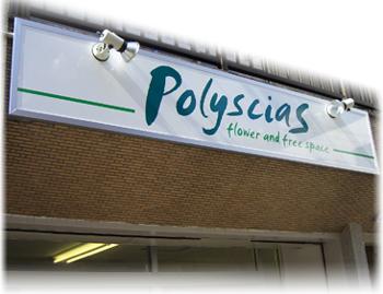 polysciasポリシャス名古屋大須の花屋さん